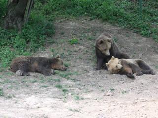 Zoo Kosice © Bubamara