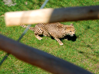 Hollywood und Safaripark Stukenbrock