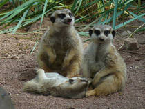 Aachener Tierpark