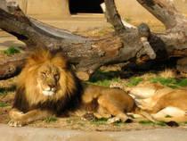 Tulsa Zoo and Living Museum © liberalmind1012