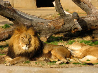 Tulsa Zoo and Living Museum © liberalmind1012