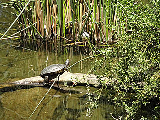 Schildkröte im Micke Grove Zoo. © amaranth5syn