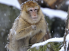 Die schönsten Zoos in Bayern