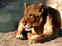 Kuwait Zoo © Kuwait Zoo