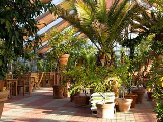 Der Zitrusgarten © Der Zitrusgarten