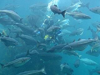 Fische im Atlanterhavsparken © Luu